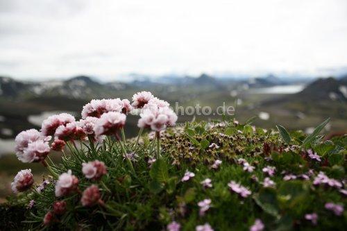 Blüte & Berg