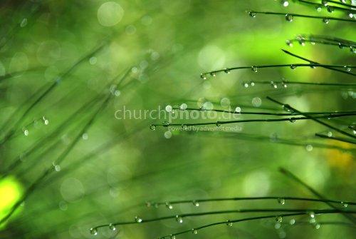 Tautropfen auf Grün