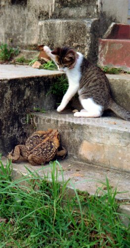 Begegnung; Katze & Kröte