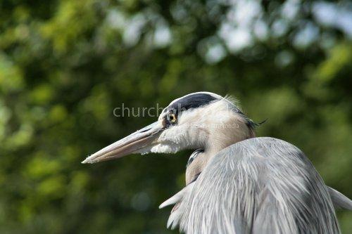 Ein Vogel in Gedanken