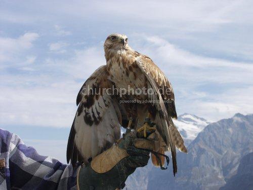 Eaglebuzzard
