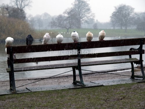 Doves in bad weather