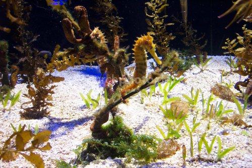 Aquarium of Eilat
