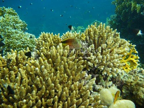 Divers paradise