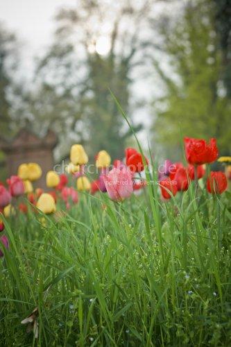 Erwachen - Frühlingsfreude