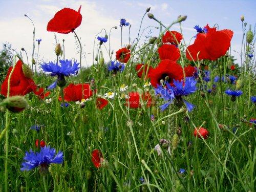 Blumen auf dem Feld