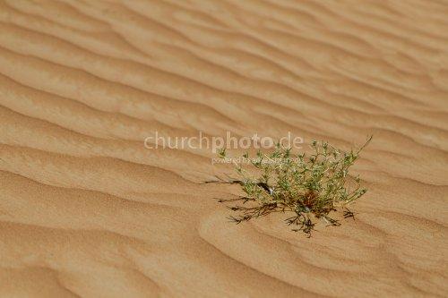 Desert and plant