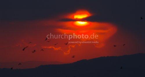 Vogelschwarm vor Sonnenuntergang II