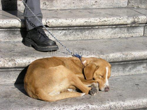 dog, sleeping