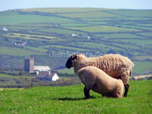 Feed my sheep...