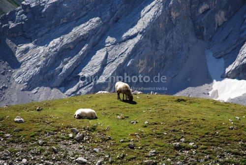 Tierisch gute Bergsteiger