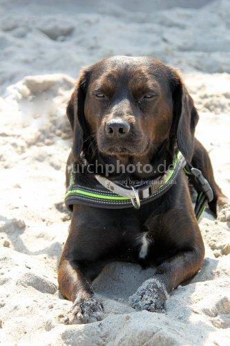 Ein Mischlingshund am Ostseestrand