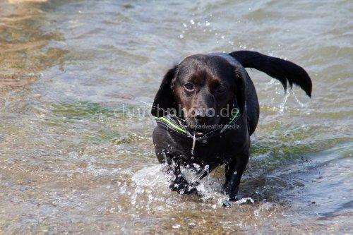 Ein Mischlingshund in der Ostsee