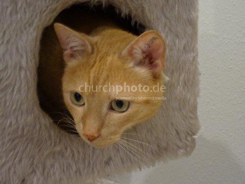 Katze - cat