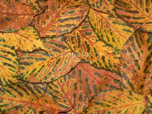 Background Herbstlaub