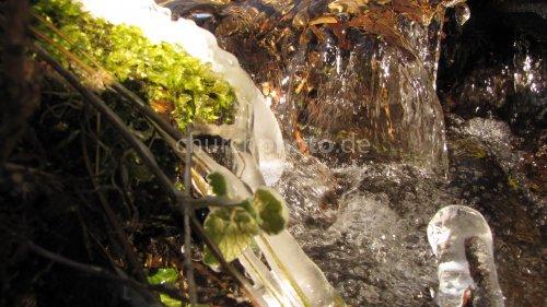 Pflanzen und Wasser