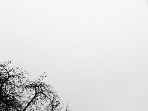 Related pictures schwarz baum auf einem farbigen hintergrund