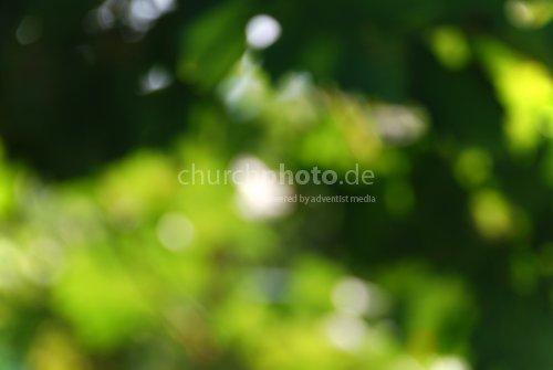 Sommer, Sonne & Grün
