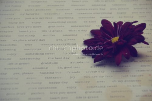 Blüte auf Schrift