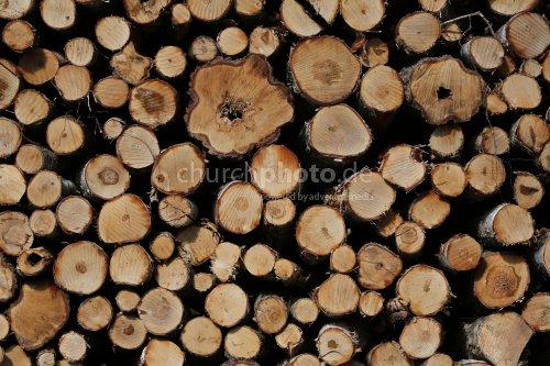 Holzpolter im Wald