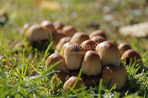 Pilze auf grüner Wiese