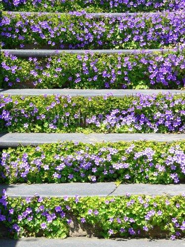 Flowersteps