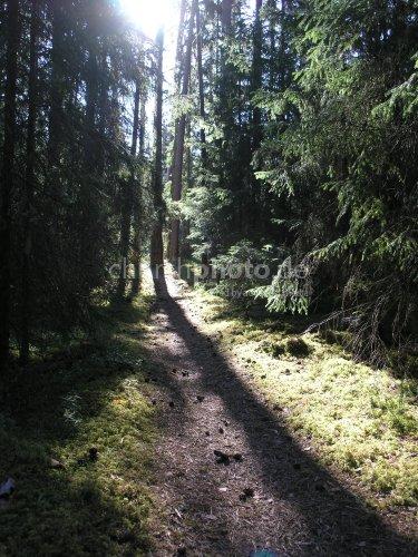 Forrest trail in morning sun