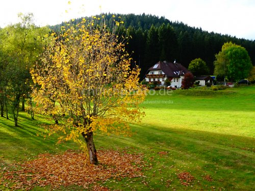 Herbststimmung - autumn mood
