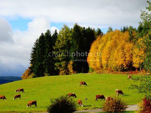 Autumn time - Herbstzeit