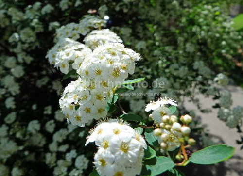 Blüten an einem Strauch