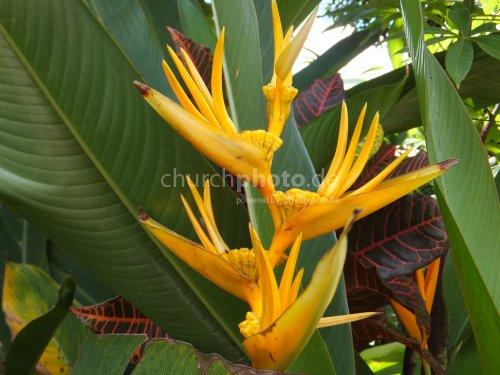 Blütenpracht - Flowers