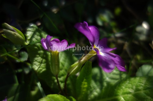 Blume im Verborgenen