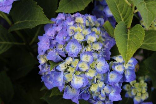 Die Blume als Gottes Schöpfung