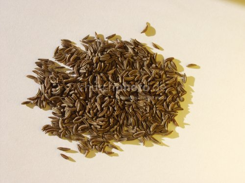 caraway dry