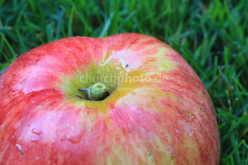 Gravensteiner apple