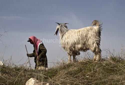 Lebanese Shepherd with goat