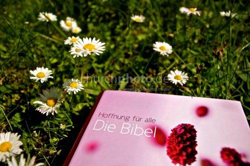 Frühling & Wort